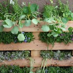 Building a vertical garden with a planter made of a pallet