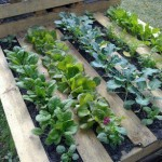 Build a little pallet garden for your terrace or patio
