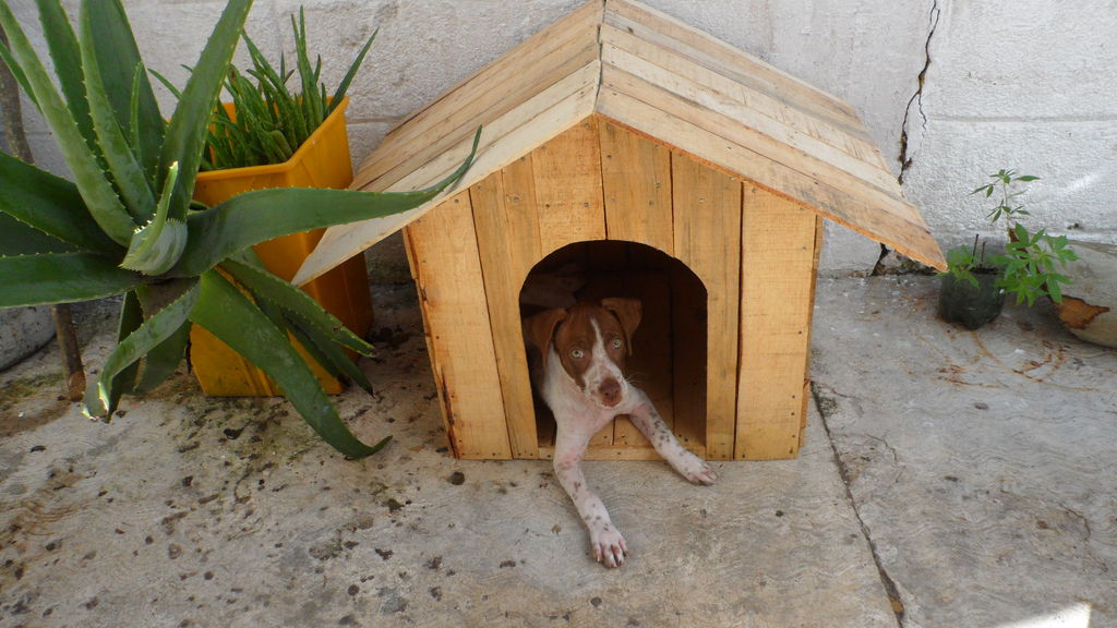 pallet or fruit box diy dog house Build a pallet doghouse with fruit boxes