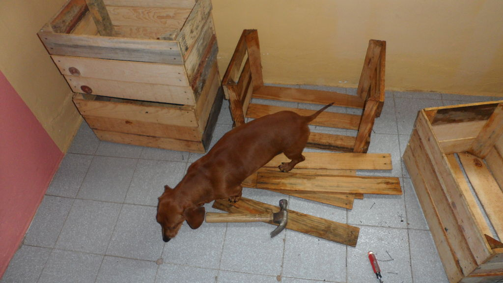 pallet_or_fruit_box_diy_dog_house3