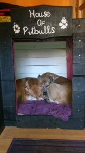 Double kennel made with wooden pallets4
