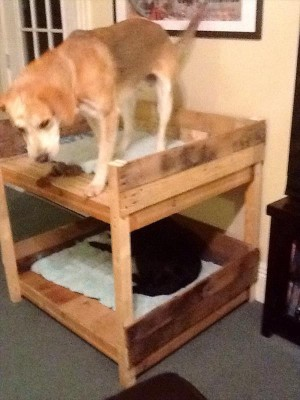 Bunkbeds for dogs made ​​with pallets 3