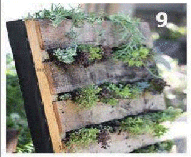 Instructions Of How To Create A Green Wall With A Single Palletdiy Pallet Furniture Diy Pallet