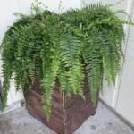 Build a mobile planter with pallets