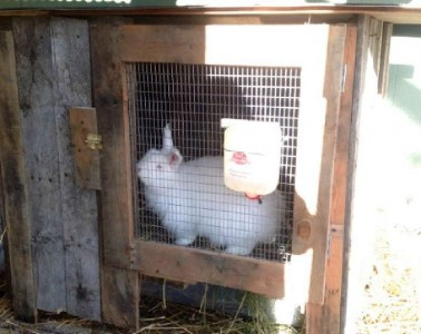 Build a rabbit hutch with pallets 5