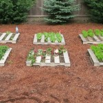 Make an organic garden with your pallets