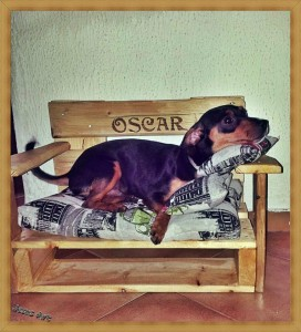 Pet cribs ideas built with pallets 6