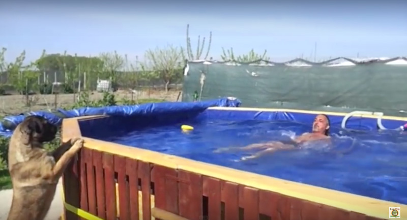 Videos With The Instructions To Build A Swimming Pool With Palletsdiy Pallet Furniture Diy