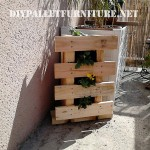 Small vertical garden with a pallet